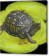 Eastern Box Turtle On Yellow Lily Canvas Print