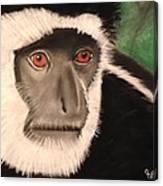 Eastern Colobus Monkey Canvas Print