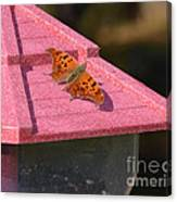 Eastern Comma Butterfly On Bird Feeder  Canvas Print