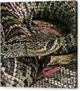 Eastern Diamondback Rattlesnake 1 Canvas Print