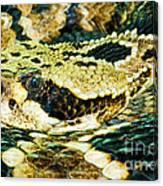 Eastern Diamondback Rattlesnake Canvas Print