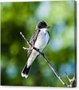 Eastern Kindbird  Canvas Print