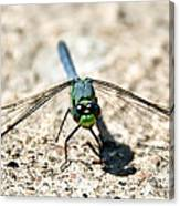 Eastern Pondhawk Front Canvas Print
