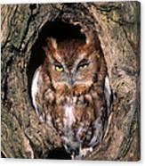 Eastern Screech Owl - Fs000810 Canvas Print