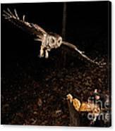Eastern Screech Owl Hunting Canvas Print