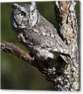 Eastern Screech-owl Otus Asio Canvas Print