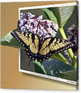 Eastern Tiger Swallow Tail Canvas Print