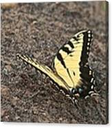 Eastern Tiger Swallowtail 8564 3241 Canvas Print