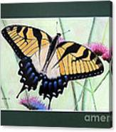 Eastern Tiger Swallowtail Butterfly By George Wood Canvas Print