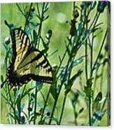 Eastern Tiger Swallowtail Ins 76 Canvas Print