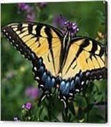 Eastern Tiger Swallowtail Canvas Print