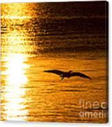 Easy Glider Canvas Print
