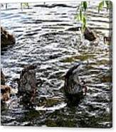 Eating Ducks Canvas Print