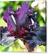 Ebony Violet Canvas Print