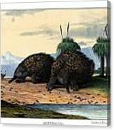Echidna Or Porcupine Anteater Canvas Print