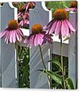 Echinacea And A White Picket Fence Canvas Print