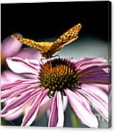 Echinacea And Friend Canvas Print