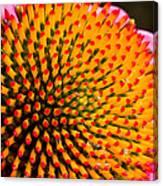 Echinacea Bloom Canvas Print