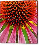 Echinacea Flower Upclose Filtered Canvas Print