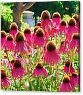 Echinacea Flowers Canvas Print