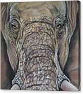 Echo Of The Elephants  Canvas Print