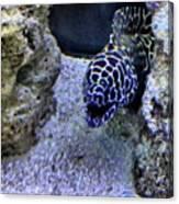 #eel #saltwater #underwater #water Canvas Print