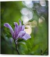 Effervescent Magnolia Canvas Print