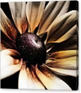 Efflorescence Canvas Print
