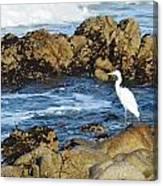 Egert Canvas Print