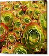 Eggplant Blossoms2 Canvas Print
