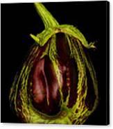 Eggplant From Jennifers' Garden Canvas Print