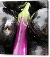 Eggplant I Canvas Print