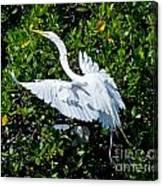 Egret 1 Canvas Print