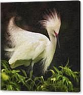 Egret 12 Canvas Print