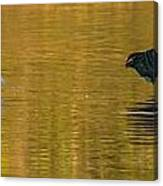 Egret And Canada Goose Canvas Print