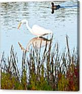 Egret And Coot In Autumn Canvas Print