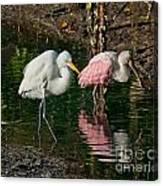 Egret And Pink Spoonbill Canvas Print
