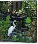 Egret At A Pond Canvas Print