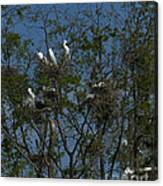 Egret Estuary   #6878 Canvas Print