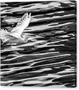 Egret Flying  Canvas Print