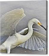 Egret Grace At The Beach Canvas Print
