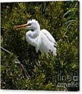 Egret In Bushes Canvas Print