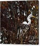 Egret In Hiding Canvas Print