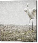 Egret In Rain Canvas Print