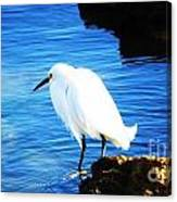An Egret In St. Augustine Canvas Print