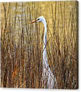 Egret In The Grass Canvas Print