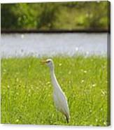 Egret On The Green-no2 Canvas Print