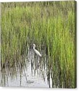 Egret In The Marsh Canvas Print