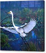 Egret In The Mist Canvas Print