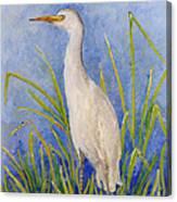 Egret Morning Canvas Print